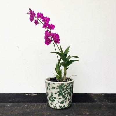 Flower Addict - Potty