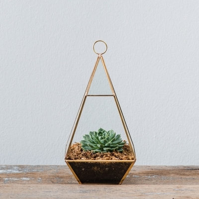 Flower Addict - Gold Ohmm Terrarium